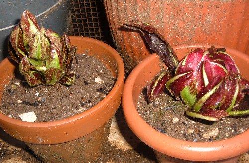 Marzo 2011 coltivare l 39 orto for Cosa seminare a febbraio