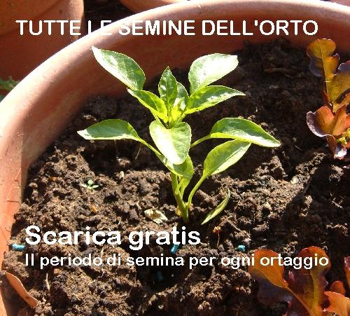 Fare un orto coltivare l 39 orto for Seminare aglio